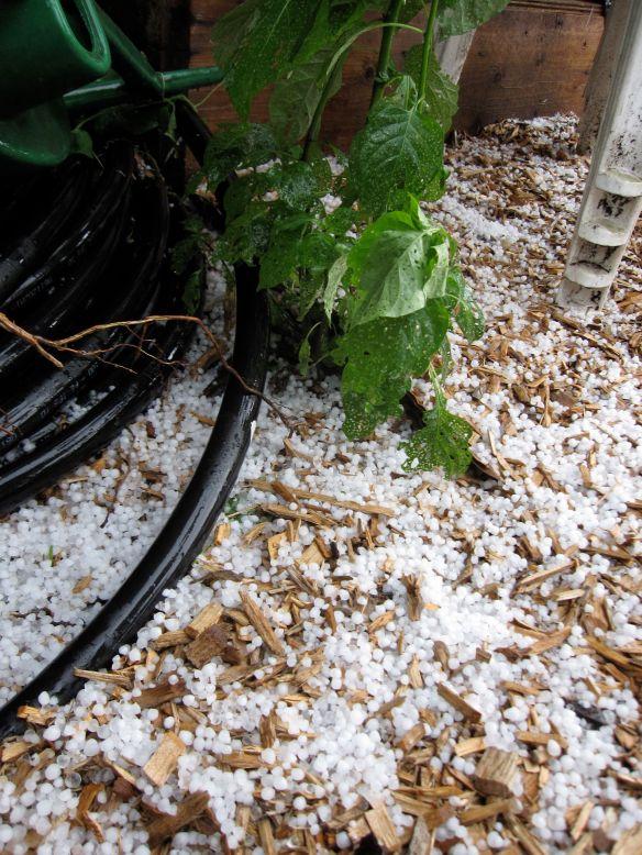 hailstormmulch