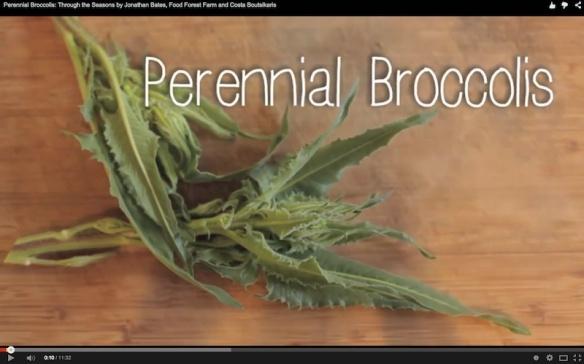 Perennial Broccolis